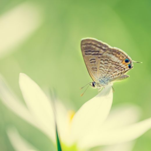butterfly_on_white_flower-2